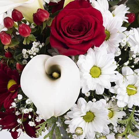 Harmony: Roses and Callas