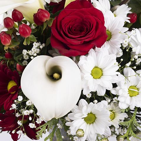 Harmonie: Roses et Callas